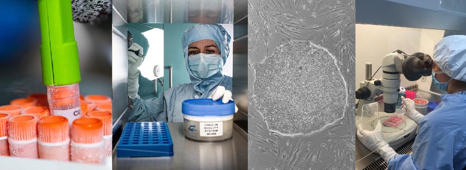 NIBSC - UK Stem Cell Bank